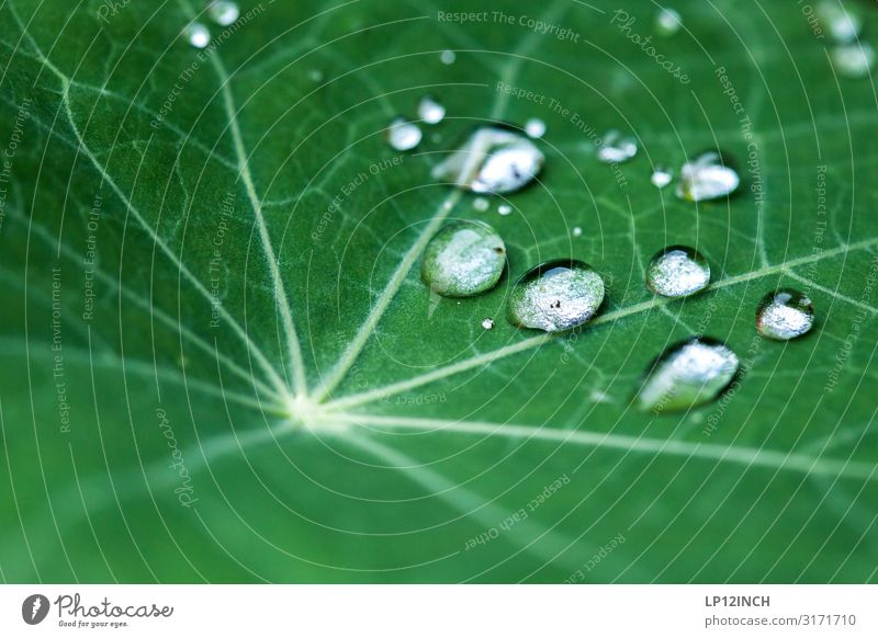 drops Environment Plant Animal Water Drops of water Foliage plant Garden Park Road traffic Lanes & trails Network Fluid Wet Green Esthetic Movement Chaos