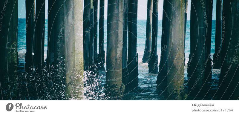 Dieters planks Beach Malibu santa monica USA Americas La Los Angeles Palm tree Sky Summer Vacation & Travel Sun Sunbathing Swimming & Bathing Ocean