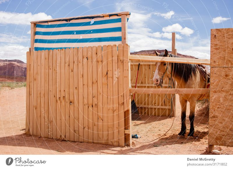 Horse Outside in Partial Barn in Desert Environment Nature Animal Sky Clouds Summer 1 Vacation & Travel Hiking Wood Brown Blue Sand fur Adventure Colour photo