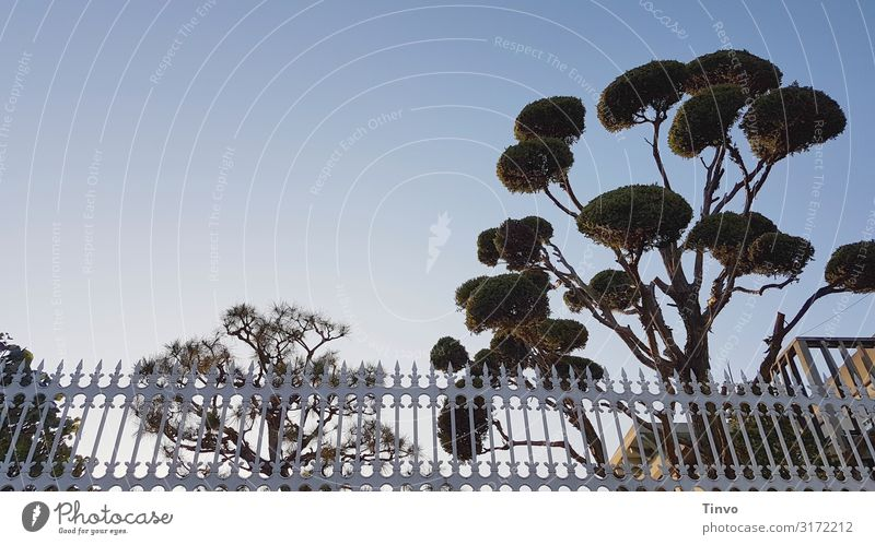 trees and fences Cloudless sky Beautiful weather Tree Point Fence Nostalgia growth habit Cypress Form cut Structures and shapes Fenced in subdued Garden