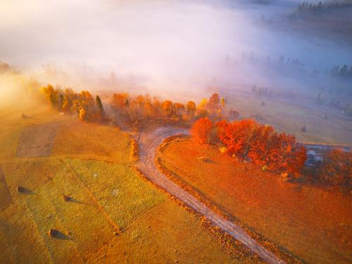 Aerial top view of autumn forest and fog. Beautiful Vacation & Travel Mountain Environment Nature Landscape Autumn Weather Fog Tree Grass Leaf Park Forest Hill