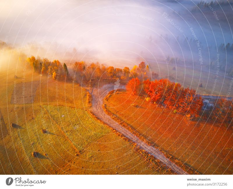 Aerial top view of autumn forest and fog. Vacation & Travel Nature Beautiful Landscape Red Tree Leaf Forest Mountain Street Autumn Yellow Environment Natural