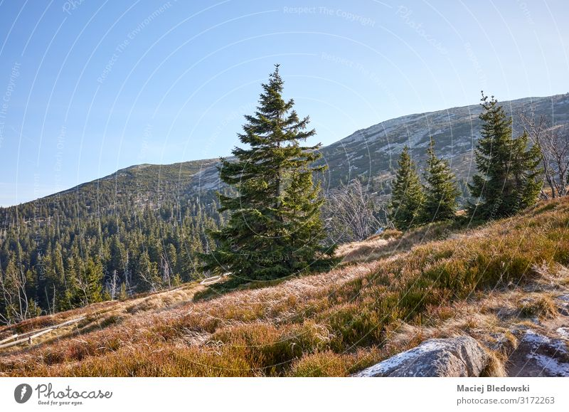 Frosty morning in Karkonosze National Park. Vacation & Travel Tourism Trip Mountain Hiking Nature Landscape Sky Autumn Tree Forest Hill Discover Experience