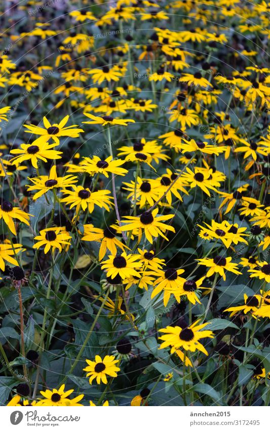 yellow flower love Flower Autumn Blossom Blossoming Nature Exterior shot Yellow Green Black Pick Summer