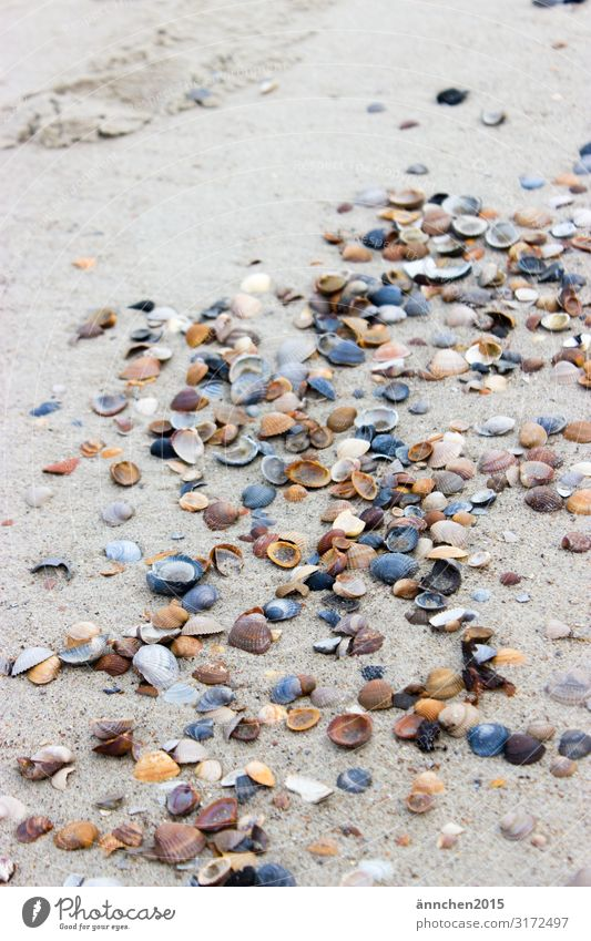 mussel path Ocean Beach Netherlands Vacation & Travel Relaxation Nature Sand Exterior shot Air Break Meditation White Blue Black Brown Bright Accumulate