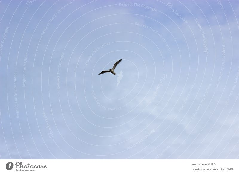 High in the sky Sky Nature Clouds Bird Seagull Freedom Flying Ocean Relaxation Exterior shot Wing Blue White Observe
