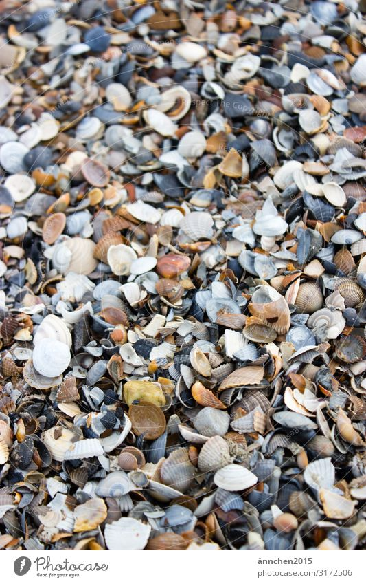 mussel mountain Netherlands Ocean Nature Beach Mussel Search Find Accumulate Exterior shot Decoration