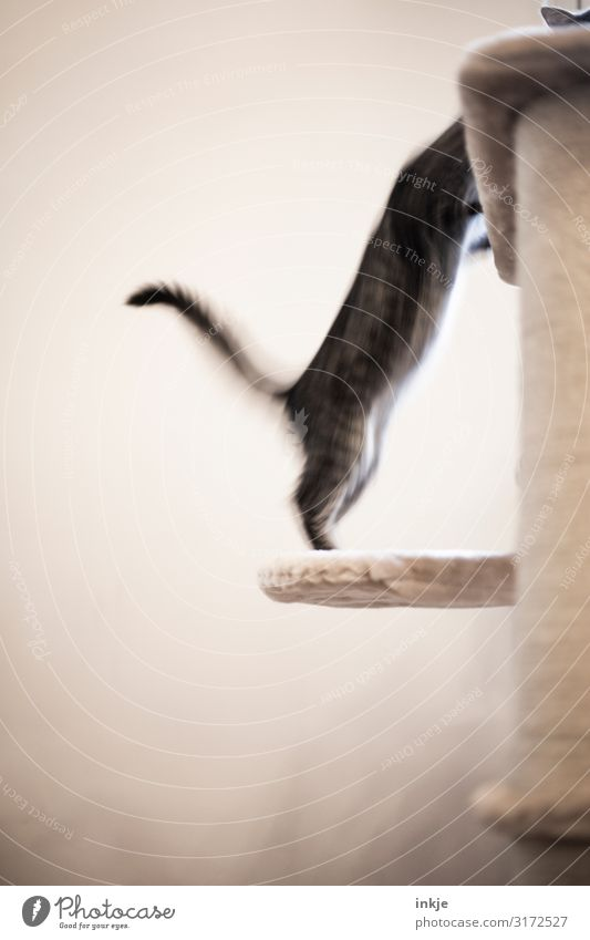 counteroffensive Pet Tails 2 Animal Baby animal Fight Playing Authentic Emotions Movement Stretching Upward Jump Playful Colour photo Subdued colour