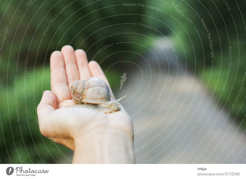 escargot Leisure and hobbies Hand Spring Summer Autumn Forest Footpath Wild animal Snail 1 Animal To hold on Authentic Small Near Natural Green Love of animals