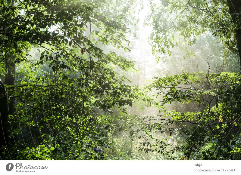 clearing Nature Sun Sunlight Spring Summer Beautiful weather Tree Forest Mixed forest Deciduous forest Fresh Bright Natural Green Idyll Clearing Translucent Air