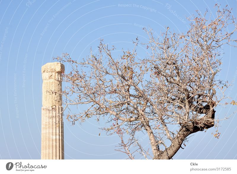 left Art Work of art Architecture Culture Antiquity Environment Cloudless sky Plant Tree Lindos Greece Ruin Manmade structures Column Tourist Attraction