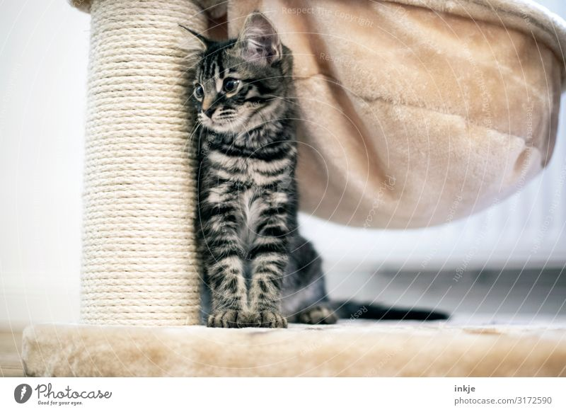 Cat Animal Baby animal Small Living or residing Flat (apartment) Authentic Cute Protection Safety (feeling of) Animal face Side Timidity Crouch