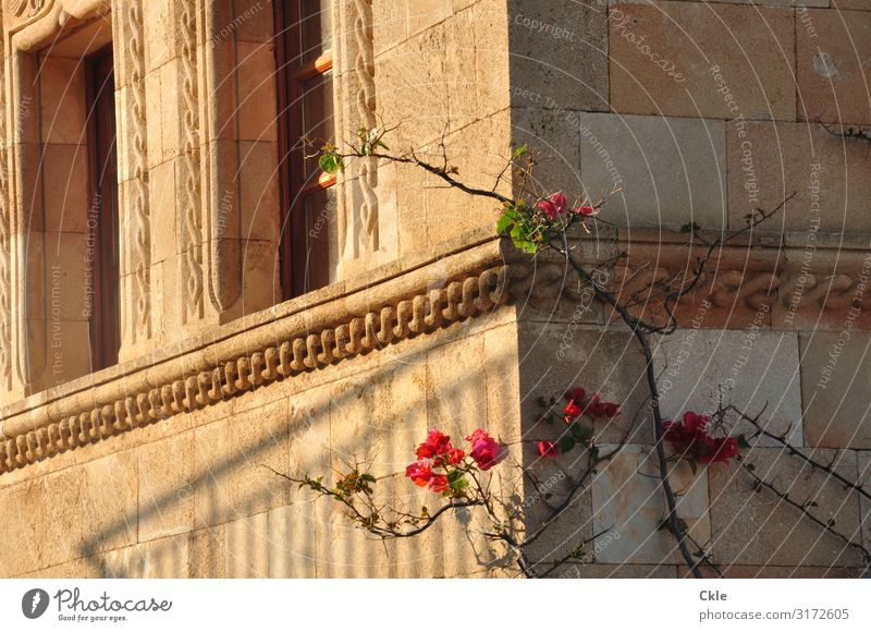 ornament House (Residential Structure) Architecture Plant Flower Rose Rhodes Greece Town Manmade structures Building Wall (barrier) Wall (building) Facade
