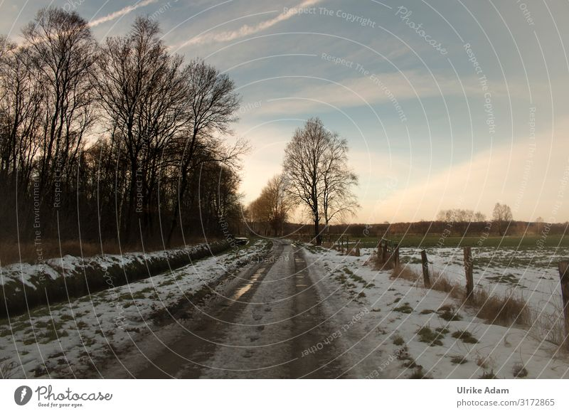 Vacation & Travel Nature Christmas & Advent Landscape Relaxation Winter Cold Lanes & trails Snow Germany Freedom Moody Trip Contentment Ice Idyll