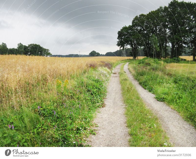dirt road Relaxation Vacation & Travel Tourism Trip Summer Hiking Nature Landscape Plant Horizon Tree Flower Grass Agricultural crop Field Baltic Sea
