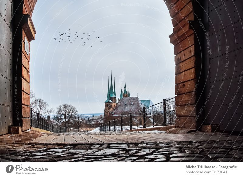 View of Erfurt Cathedral Vacation & Travel Tourism Sky Sunlight Winter Beautiful weather Snow Tree Thuringia Europe Town Deserted Church Dome Tower