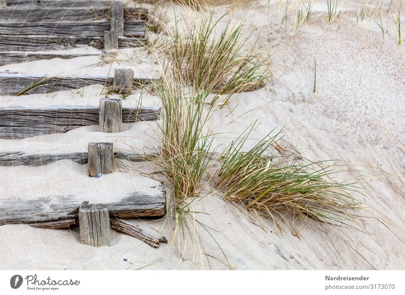 Stairs to the beach Vacation & Travel Tourism Beach Ocean Nature Landscape Sand Summer Grass Coast North Sea Baltic Sea Lanes & trails Wood Old Maritime Retro