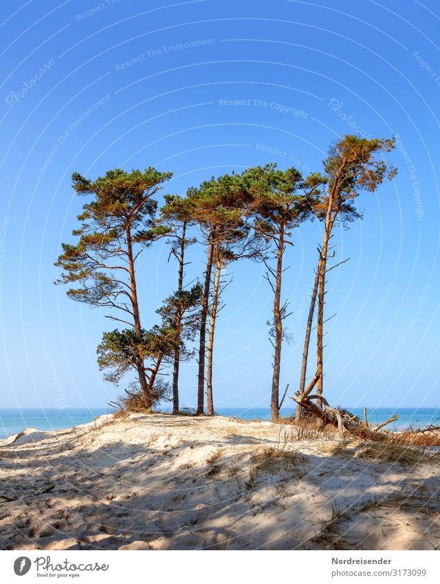 western beach Vacation & Travel Tourism Summer Summer vacation Sun Beach Ocean Nature Landscape Sand Water Cloudless sky Beautiful weather Tree Baltic Sea