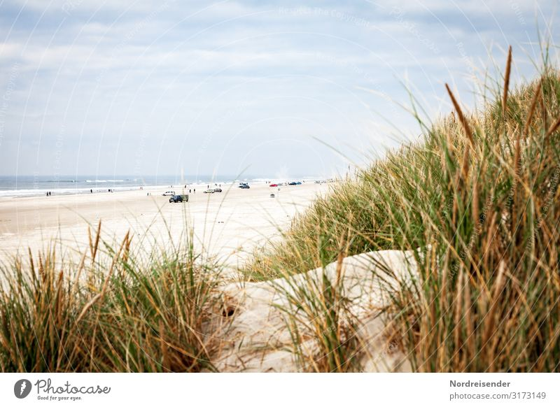 Car beach in Denmark Leisure and hobbies Vacation & Travel Tourism Trip Freedom Camping Summer Summer vacation Beach Ocean Nature Landscape Sand Water