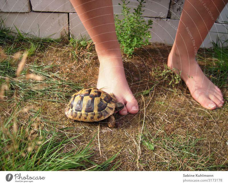turtle Human being Feminine Young woman Youth (Young adults) Feet 1 18 - 30 years Adults Summer Beautiful weather Grass Garden Animal Pet Turtle Tortoise-shell