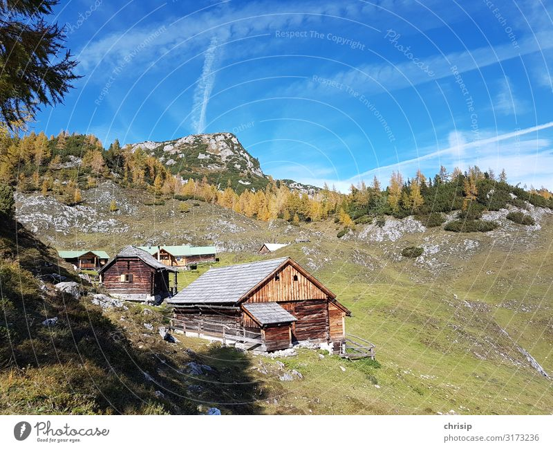 on the mountain pasture Environment Nature Landscape Sky Autumn Beautiful weather Tree Larch Alps Mountain kufstein Peak Friendliness Warmth Emotions Moody
