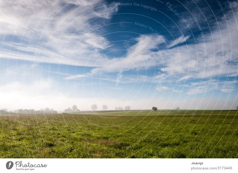 haze Nature Landscape Elements Sky Clouds Spring Summer Beautiful weather Fog Tree Meadow Horizon Relaxation Moody Environment Far-off places Rural