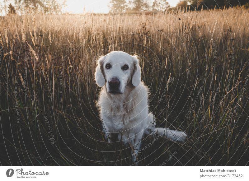 Nature Dog Landscape Sun Animal Autumn Environment Natural Brown Friendship Field Sit Cute Pet Trust Love of animals