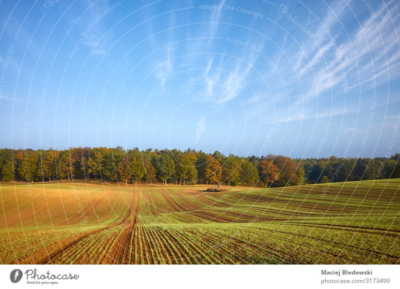 Autumn landscape with field and forest Agriculture Forestry Nature Landscape Sky Horizon Grass Meadow Field Freedom Serene Crops scenery fall country Rural