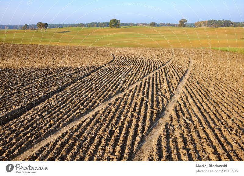 View of a plowed field in warm morning sun Agriculture Forestry Industry Nature Landscape Earth Sky Horizon Autumn Meadow Field Furrow tillage land Farm Rural