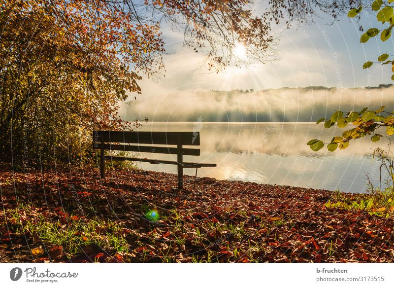 Park bench on the lakeshore Well-being Relaxation Calm Vacation & Travel Hiking Environment Nature Sunlight Autumn Beautiful weather Fog Lakeside To enjoy Dream