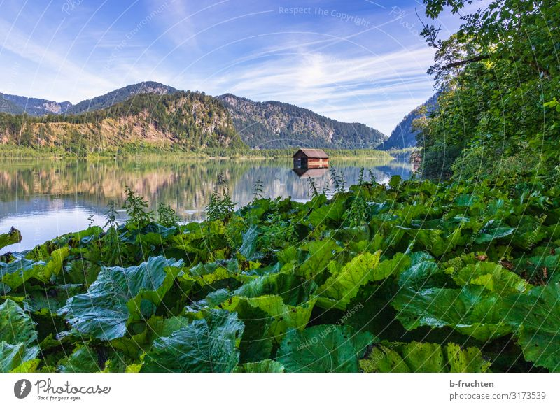 Small mountain lake in the Salzkammergut Harmonious Relaxation Vacation & Travel Tourism Summer Mountain Hiking Nature Landscape Plant Forest Alps Lakeside