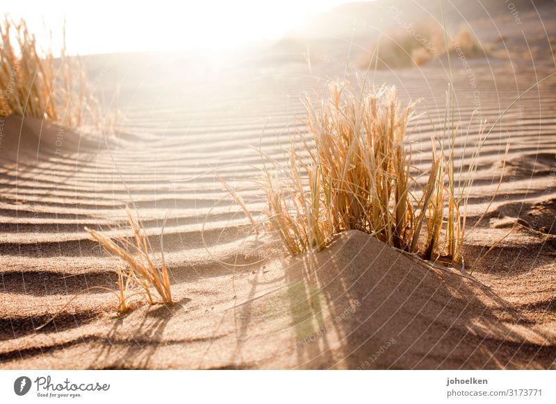 desert sun Landscape Sand Sun Sunlight Summer Beautiful weather Grass Waves Beach Desert Sahara Line Undulation Illuminate Infinity Hot Bright Maritime Warmth