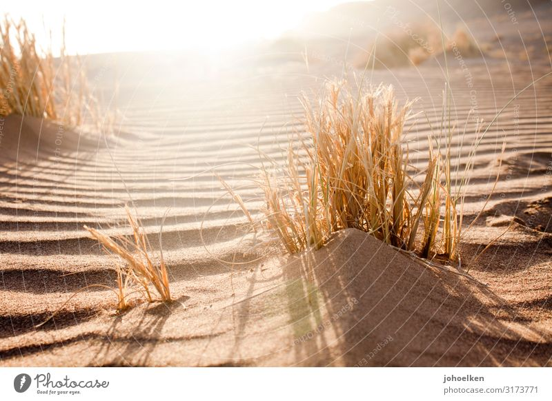 Vacation & Travel Nature Summer Landscape Sun Relaxation Calm Beach Warmth Grass Sand Bright Line Illuminate Gold Waves