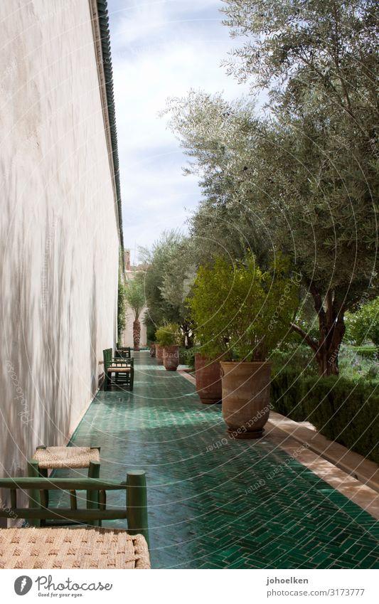 Mediterranean garden Green Islam Garden terracotta Exterior shot Sunlight Shadow Olive Olive tree Tile warm season Summer