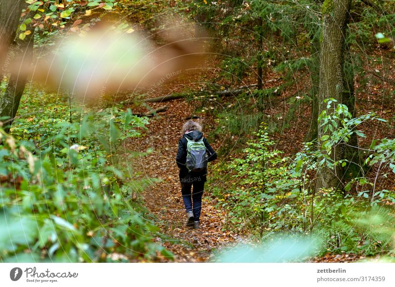 Wandering female person Mountain Hill Elbsandstone mountains Relaxation Vacation & Travel Autumn Landscape Deciduous forest Saxon Switzerland Forest Hiking