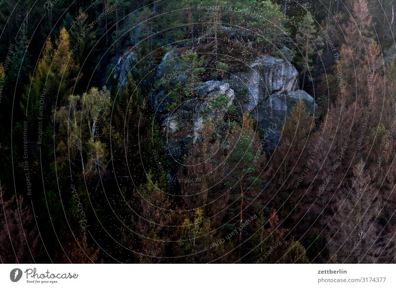 Flying over the Polenztal valley Mountain Elbsandstone mountains Relaxation Rock Vacation & Travel Travel photography Autumn hollow stone Hill Small Town