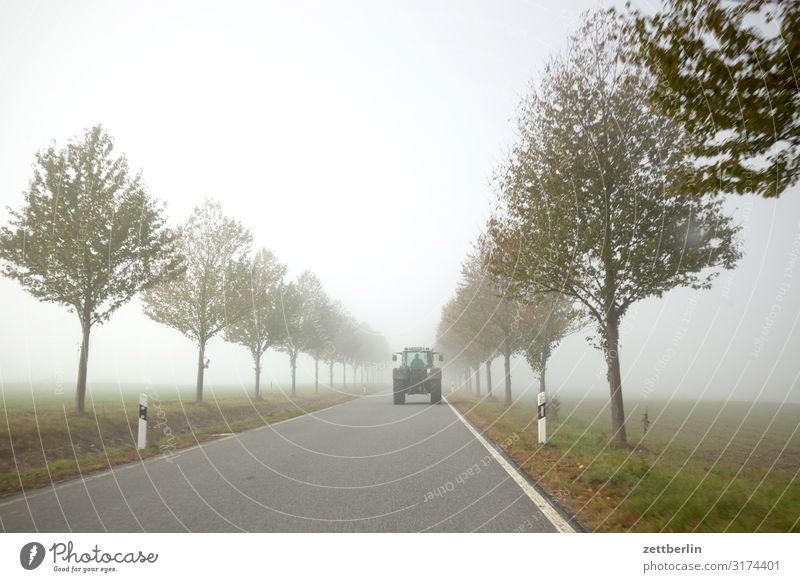 Tractors in the fog Avenue Haze Direct Right ahead Autumn Autumnal colours Landscape Country road Deserted Morning Fog Perspective Far-off places Street