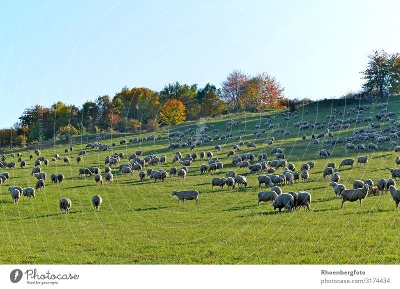 Nature Plant Landscape Animal Autumn Environment Grass Hiking Weather Pet Climate change Herd Farm animal