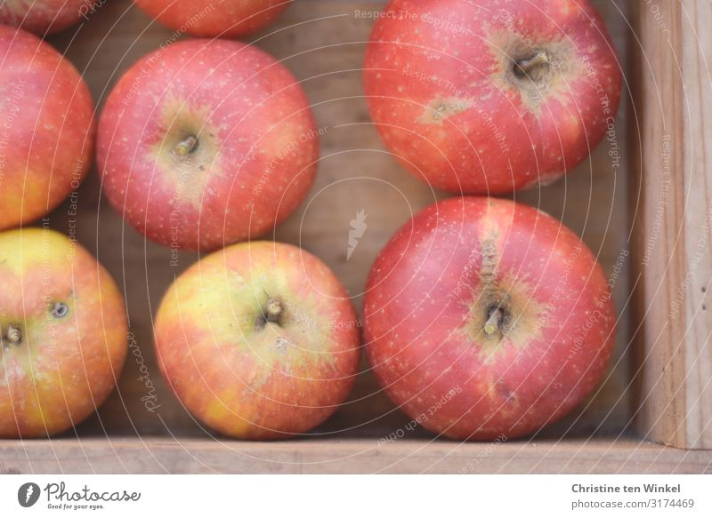 Delicious red apples in a wooden box Food Fruit Apple Cox Orange Nutrition Organic produce Vegetarian diet Box Esthetic Authentic Simple Fresh Healthy