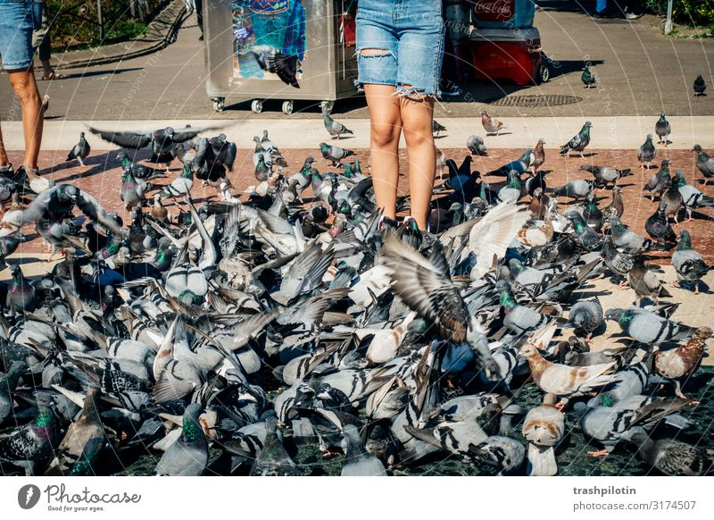 Sea of doves Barcelona Spain Europe Downtown Tourism City trip Colour photo Exterior shot Day Sightseeing Town vacation pigeons Pigeon Pigeon droppings Feeding