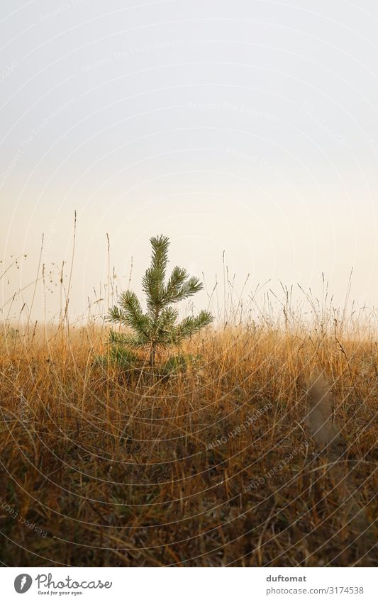 Children Christmas Tree Nature Landscape Plant Earth Autumn Climate Fog Wild plant Meadow Forest Hill Dark Fresh Cold Brown Unwavering Horizon Moody Dream