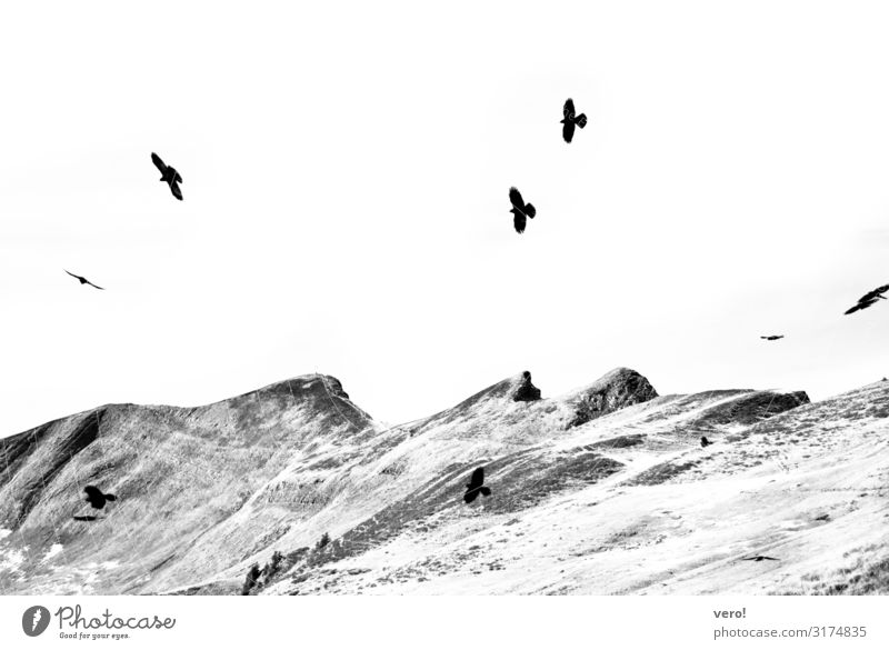 You fly away Freedom Hiking Landscape Sky Rock Alps Bird Flock Movement Flying To enjoy Authentic Simple Elegant Together Infinity Natural Speed Contentment