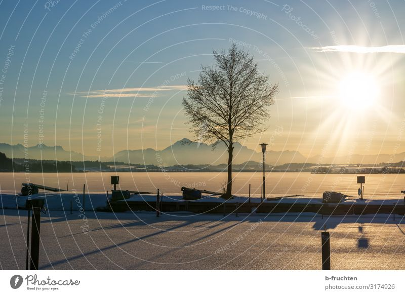 frozen lake at sunset Christmas & Advent Nature Landscape Sunlight Winter Beautiful weather Ice Frost Snow Tree Lakeside Observe To enjoy Wallersee