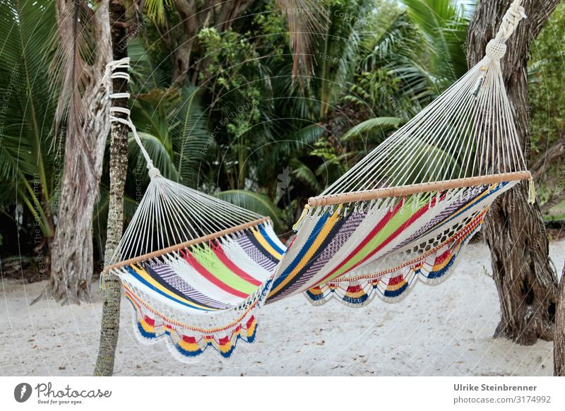 Colourful hammock between palm trees Hammock crochet Crocheted variegated palms Hang hang out resting place hung Cords yarn Sleeping accommodation