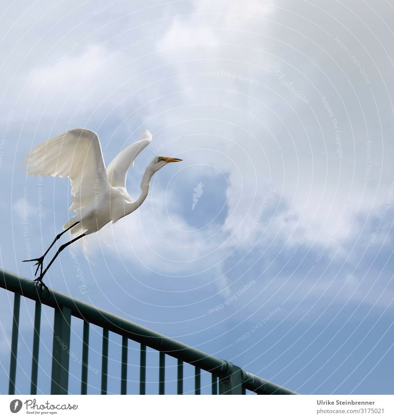 700 No reason to take off Vacation & Travel Tourism Trip Summer Summer vacation Bridge Terrace Handrail Animal Farm animal Bird Wing Heron Little Egret