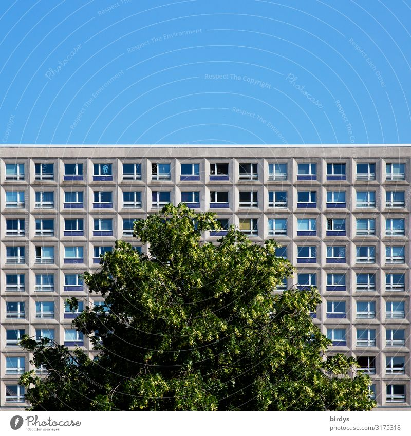 urban green Living or residing Flat (apartment) Cloudless sky Summer Beautiful weather Tree Treetop Berlin Town Capital city Downtown Deserted