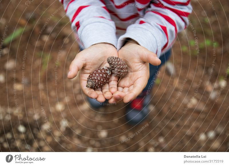Child holds pine cones in his hands Lifestyle Decoration Education Human being Toddler Boy (child) Infancy Hand 1 1 - 3 years Nature Forest Shirt Stripe