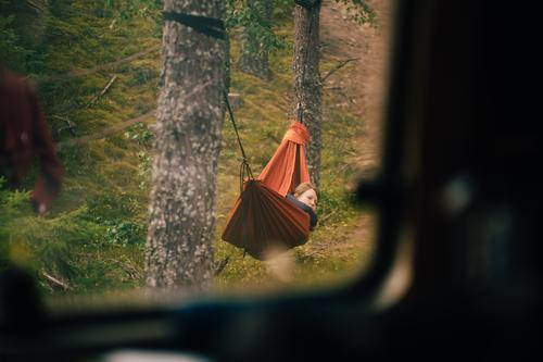 just sneaking upon trees and leaves Leisure and hobbies Vacation & Travel Tourism Trip Adventure Freedom Camping Forest Contentment Loneliness Relaxation Idyll