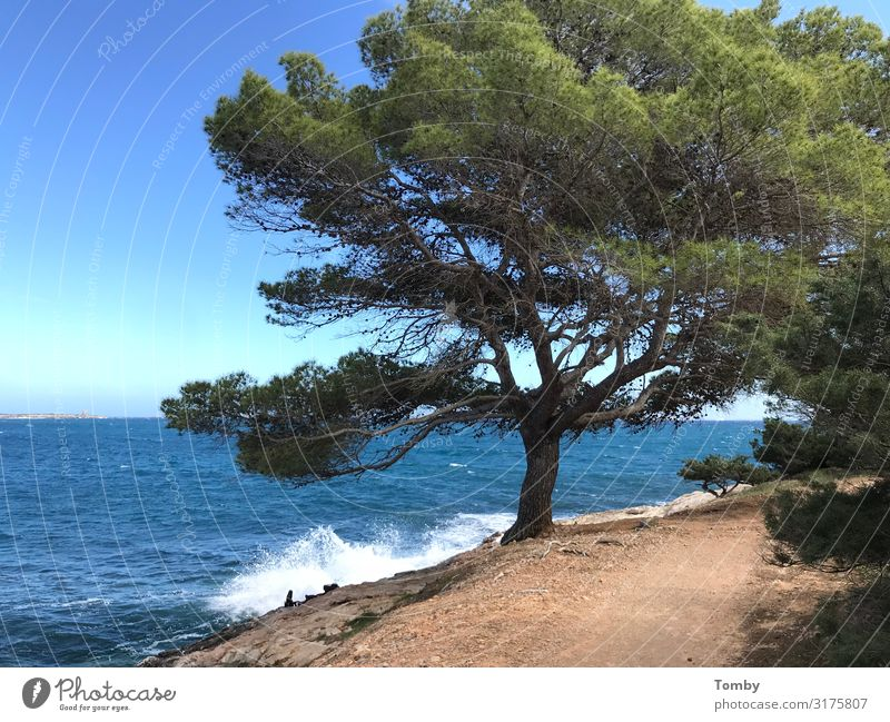 Ibiza in spring Environment Nature Landscape Plant Animal Sand Water Spring Summer Weather Beautiful weather Swimming & Bathing Discover Relaxation To enjoy