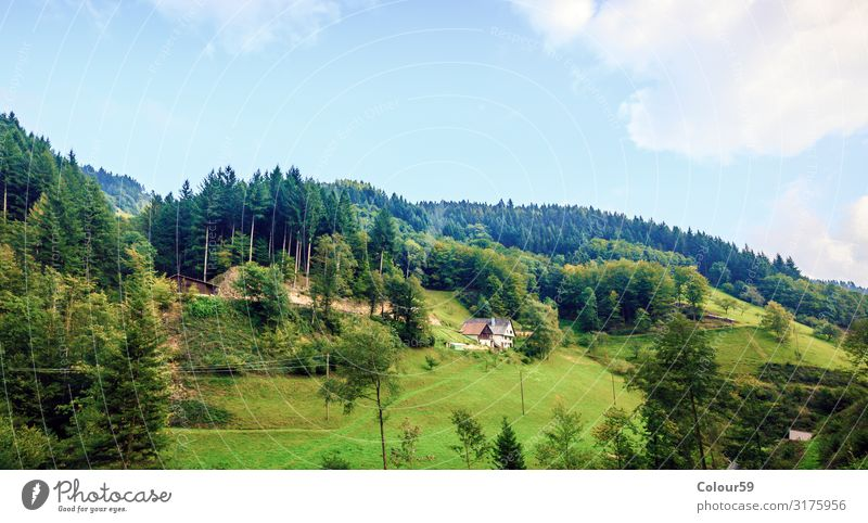 Landscape in the Black Forest Vacation & Travel Tourism Trip Summer Nature Beautiful weather Mountain Deserted Tradition Europe Baden-Wuerttemberg